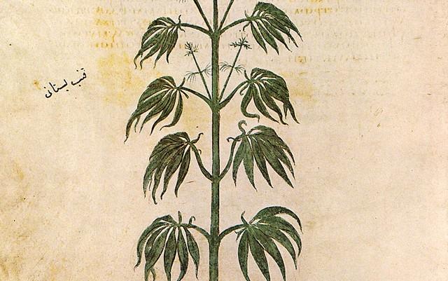 ancient-hemp-cultivation