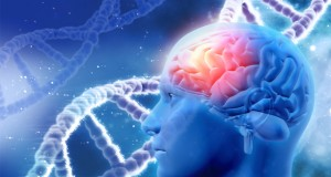 cannabis-can-help-heal-brains-damaged-by-alcohol
