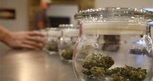 colorado-cannabis-resort