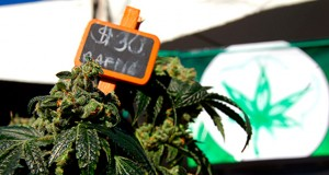 dc-superior-court-clears-hurdle-for-legal-marijuana-sales