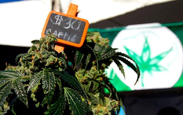 dc-superior-court-clears-hurdle-for-legal-marijuana-sales