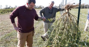 indiana-ban-commercial-hemp-growing