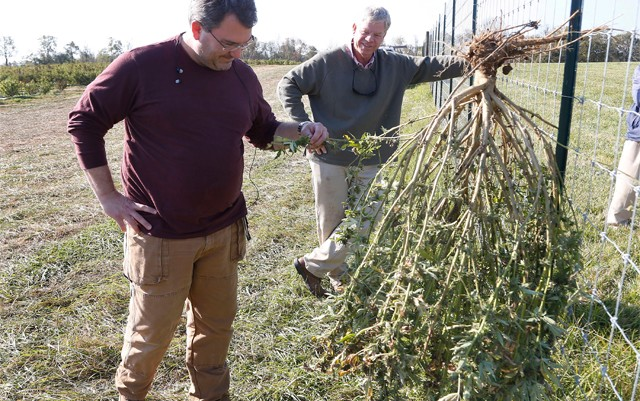 indiana-ban-commercial-hemp-growing