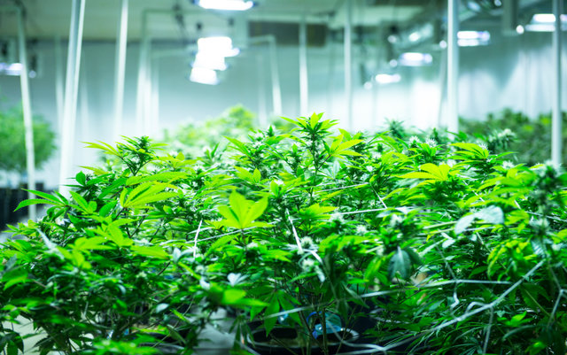 Georgia May Expand Medical Marijuana Conditions But Still Doesn't Offer Legal Access | The ...