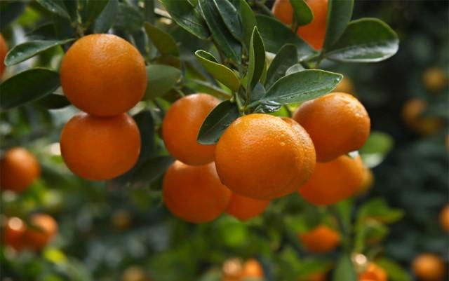 strain-review-tangerine-dream