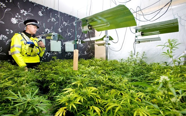europe-spends-over-10-billion-per-year-on-cannabis