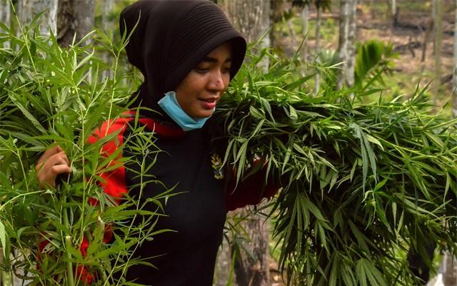 federal-marijuana-tracking-has-declined-since-legalization