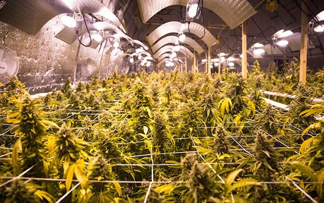 maine-could-put-marijuana-journalism-off-the-shelves