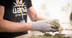 wana-company-marijuana-edibles