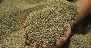 busting-myths-about-hemp
