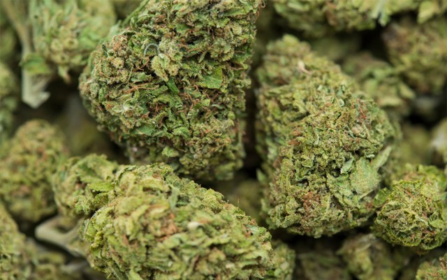 floridians-will-have-access-to-medical-marijuana-by-end-of-summer