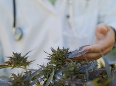 crowdfunding-medical-marijuana-research