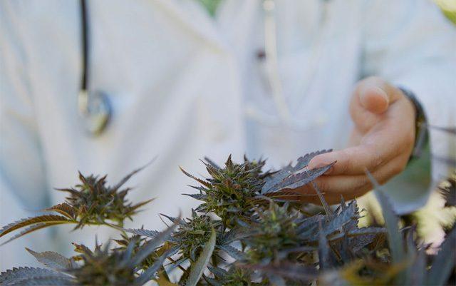 crowdfunding-medical-marijuana-research