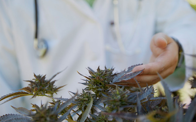 medicinal marijuana research papers