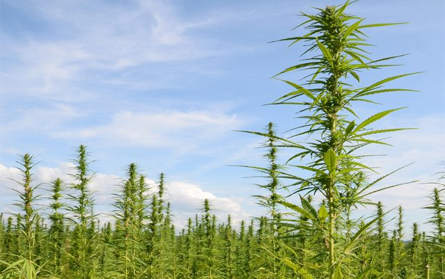 naihc-petitions-dea-to-remove-hemp-from-drug-schedules