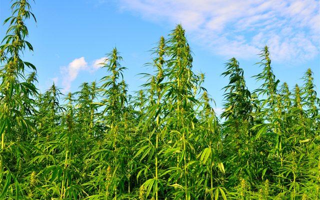 rhode-island-legalized-hemp