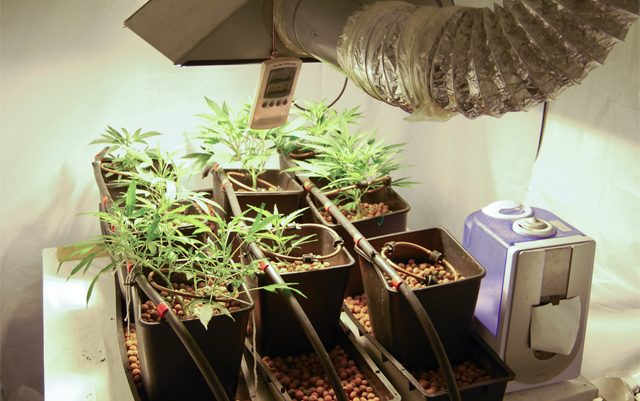 benefits-of-growing-your-own-cannabis