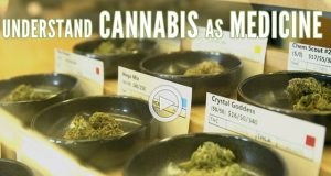 green-flower-media-understanding-cannabis-as-medicine