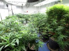 maryland-air-conditioner-manufacturer-falls-into-medical-marijuana-industry
