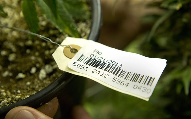 seattle-traceability-company-gets-approved-for-recreational-sales-in-oregon