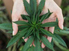 casino-owner-has-spent-over-5-million-fighting-marijuana-legalization