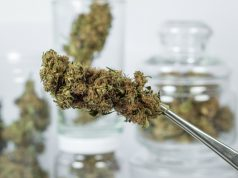 marijuana-is-getting-stronger-and-thats-a-good-thing