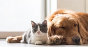 are-pets-being-harmed-by-accidentally-ingesting-cannabis