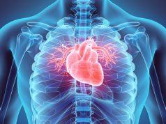 can-marijuana-use-weaken-heart-muscles