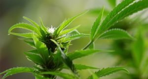 cannabis-suppositories-offer-patients-a-new-way-to-ingest-cannabis
