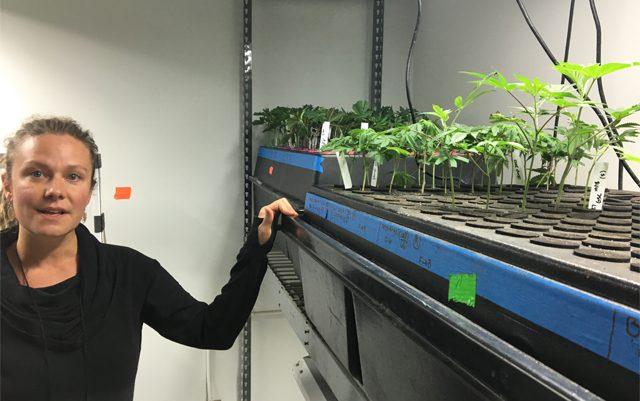 meet-the-female-master-grower-behind-chongs-choice-cannabis-brand