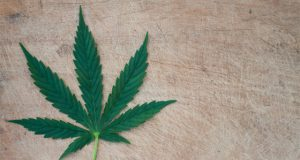 o-matter-what-the-gray-market-for-marijuana-will-continue