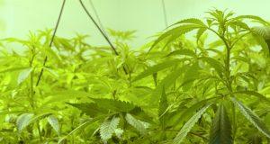 pueblo-city-council-approves-retail-cannabis-dispensary-regulations