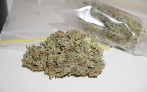 auto-daiquiri-lime-strain-review-img-1