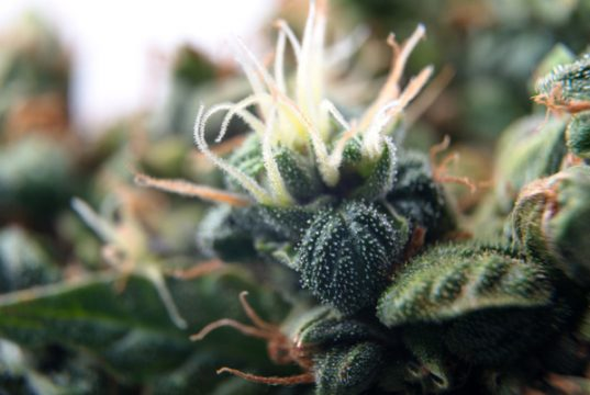3d-printed-cannabis-inhaler-allows-doctors-to-administer-cannabis-remotely