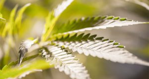 a-colorado-mayors-advice-to-MA-lawmakers-on-marijuana