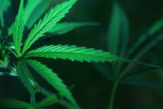 does-cannabis-enhance-night-vision