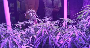 the-denver-INDO-expo-caters-to-grows-of-all-sizes