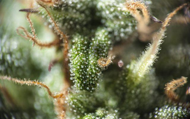 the-mainstreaming-of-marijuana