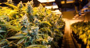 PGE-discount-CA-cannabis-electric-utility-bills