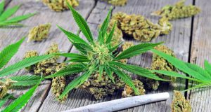 court-says-MMJ-is-okay-on-college-campuses-in-AZ