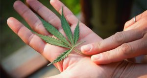 cannabis-and-trump-what-will-happen-to-medical-and-recreational-laws