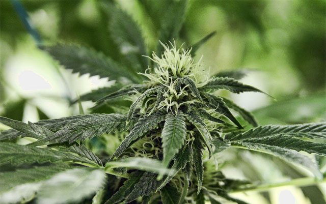 colorado-gov-signs-two-bills-aimed-at-reducing-marijuana-black-market