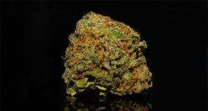 children-going-to-ER-for-marijuana-ingestion-on-the-rise-in-france