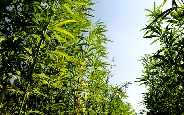 hemp-and-green-energy