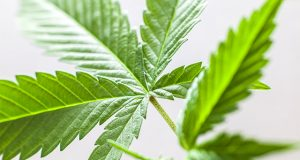 poll shows republicans-increasingly-in-favor-of-legalization