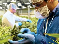 tilray-expands-to-4-countries
