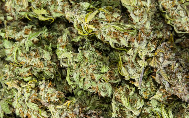 US-attorney-in-Oregon-wants-to-do-something-about-excess-MJ-supply