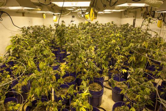 how-has-MJ-legalization-impacted-colorado-economically