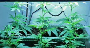 former-house-speaker-says-feds-should-back-off-of-marijuana