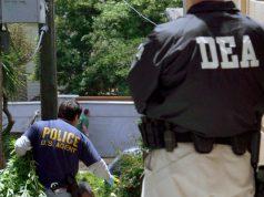 DEA-cannabis-seizure-figures-suggest-black-market-slowly-fading